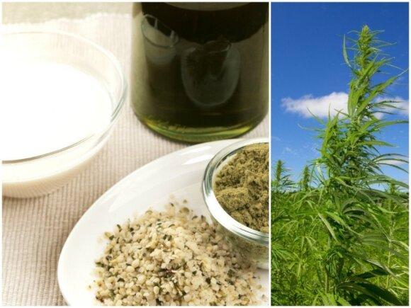 Kanapių sėklos, aliejus, pienas ir pluoštinės kanapės augalas (Shutterstock nuotr.)