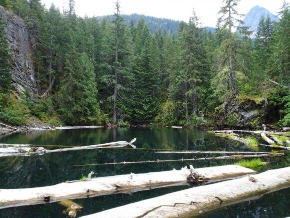 Užburianti Amerikos gamta, arba kaip aš žmoną nuo meškų saugojau