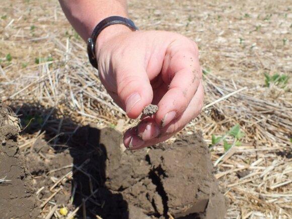 Gamtinė žemdirbystė / NRCS SD nuotr.
