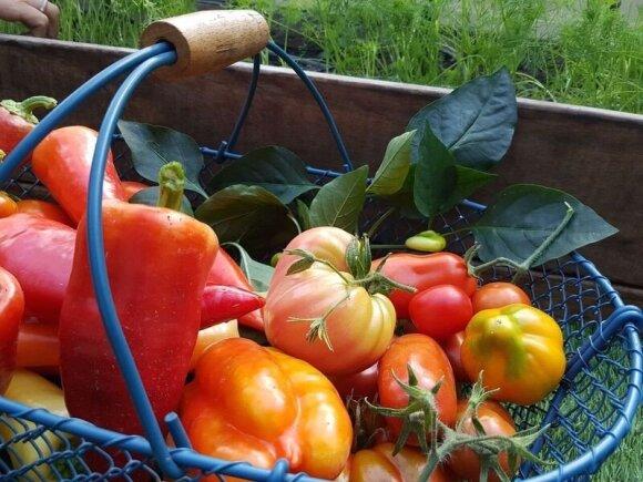 Veikli moteris kūrybingai žvelgia net į daržovių auginimą