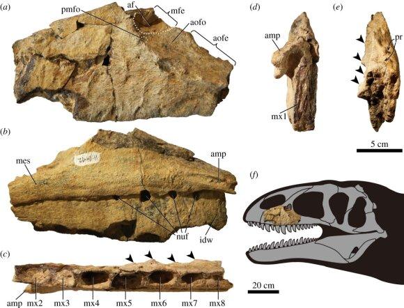 Ulughbegsaurus uzbekistanensis/Scanpix/Vida Press/Kohei Tanaka/Julius T. Csotonyi nuotr.