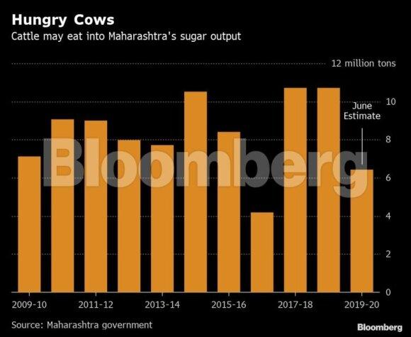 Nuo cukraus pertekliaus Indiją gelbės karvės