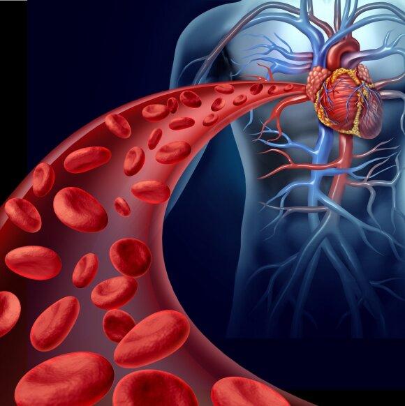 Kraujagyslės