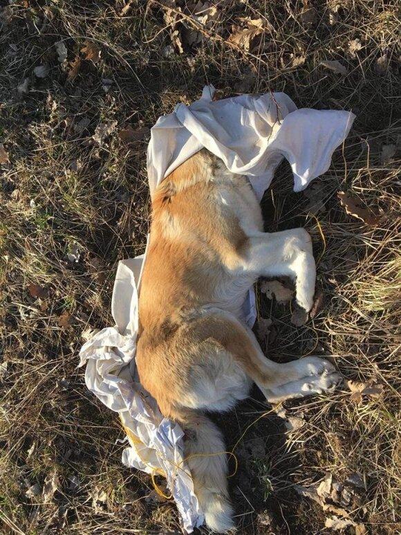 Nesuvokiamas žiaurumas: taip baisiai nukankinto šuns dar nėra radę net visko matę gelbėtojai