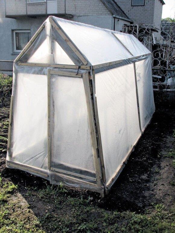 Šiltnamio parengimas pavasarį: dirvožemio paruošimas daigų sodinimui
