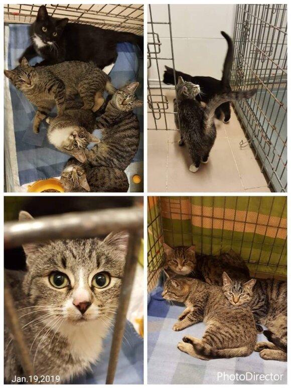Ieškoma skubi globa arba namai jauniems katinėliams