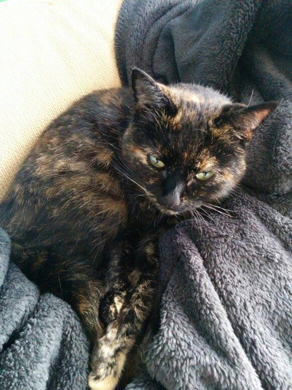 Šeimininko ant antkaklio rastas raštelis atskleidė katės paslaptį