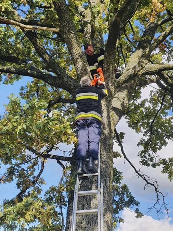 Kažemėkų kaime kačiuką gelbėjusiems ugniagesiams teko lipti į medį