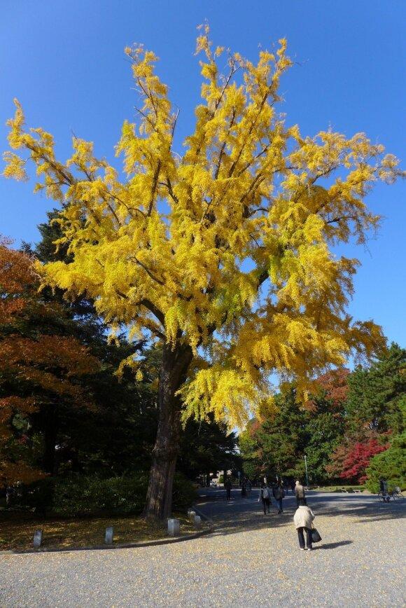 Ruduo Kioto parke