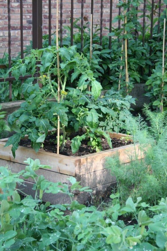 Pakeltos lysvės: kokia daržui nauda iš jų