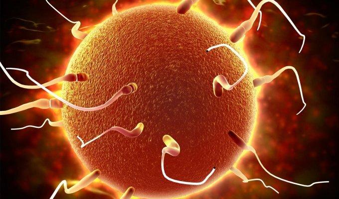 10 faktų, kurių nežinojote apie spermatozoidus