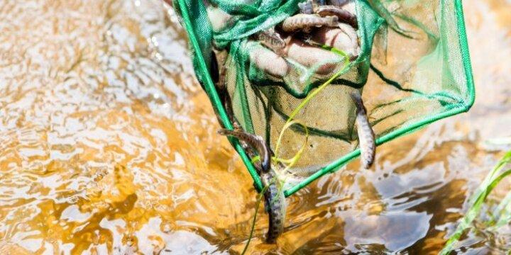 Vilnelė ir žuvys