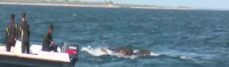 Šri Lankoje išgelbėti du į jūrą nunešti drambliai