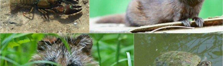 Invazinės gyvūnų rūšys