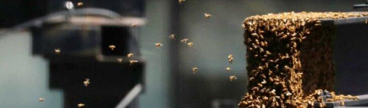 Niujorko dangoraižyje apsigyvenęs bičių spiečius