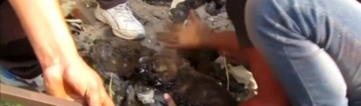 Indijoje išgelbėti trys į smalos pinkles pakliuvę šunyčiai