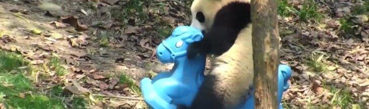 """""""Slaptas pandų gyvenimas"""" (43 serija): arkliukas ir draugauti norėjęs paukščiukas"""