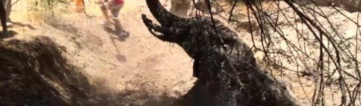 Kenijoje gelbėtojai vadavo purve įstrigusį dramblį