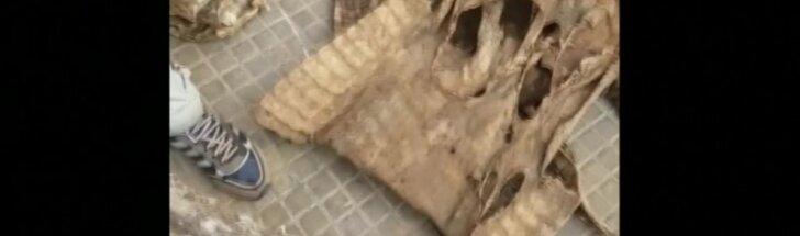 Senegalo sotinėje sulaikytas didžiulis kiekis krokodilų ir pitonų odos
