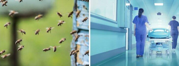 bitės mirtis