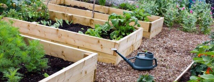 Sodininko pradžiamokslis: lysvių pasirinkimas ir įsirengimas