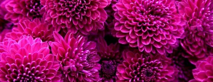 Patikrinti patarimai, kaip sodinti svogūnines gėles