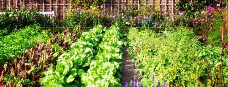 Priežastys, kodėl sėjomainą verta taikyti kiekviename darže