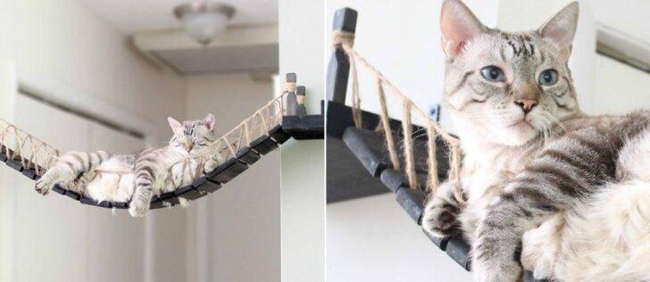 Katėms alergiškas vyras pagamino baldą, nuo kurio jos nenori nulipti