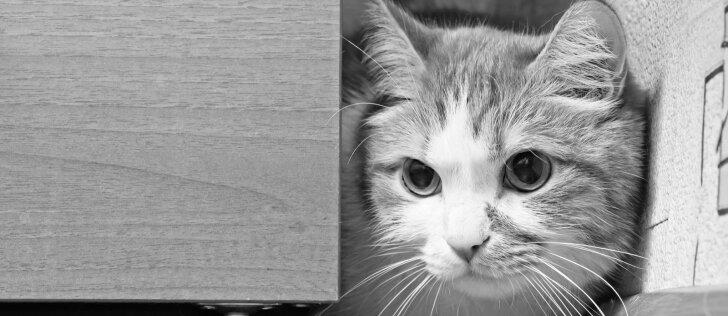 Nesuvokiamo žiaurumo protrūkis Ukmergėje: pirmokas katę pritrenkė lazda, šešis kačiukus puolė akmeniu