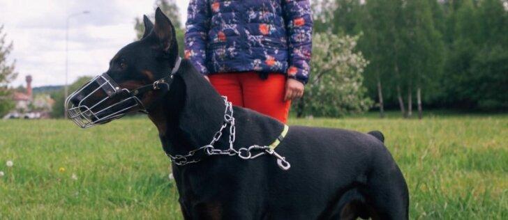 Šunų elgsenos specialistas pataria: kaip elgtis su dominuojančiu šunimi