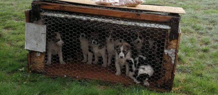 Tokiam elgesiui nėra žodžių: vištų narve palikti 9 šunyčiai