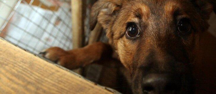 Seimo nario siūlomas įstatymas sukėlė tikrą audrą: suloję šunys keliaus į prieglaudas