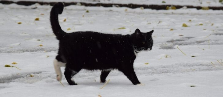 Benamėms katėms per šalčius reikia užuovėjos ir maisto