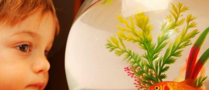 Kokį akvariumą rinktis: stiklo ar išmanųjį akrilo?