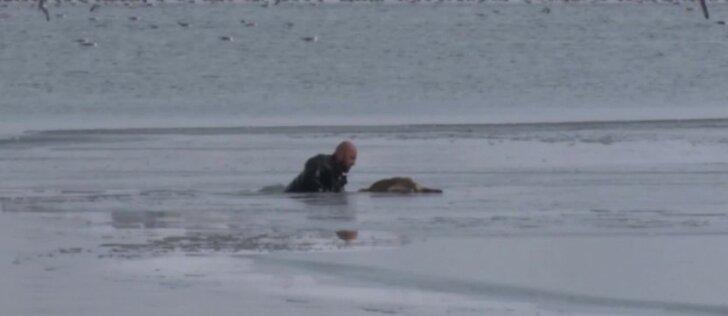 Policijos naras iš užšalusio ežero ištraukė šuniuką