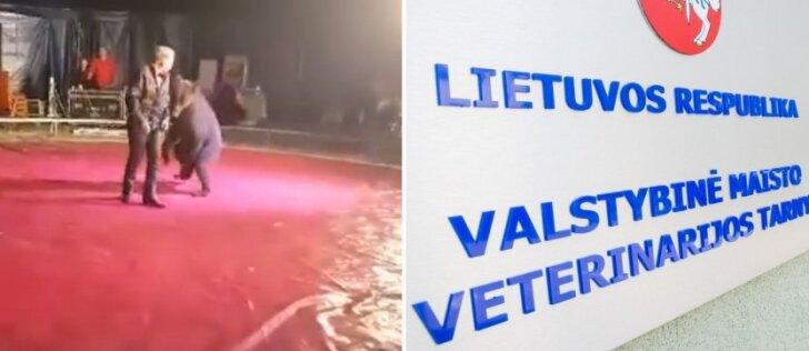 Po kritikos dėl alinamos meškos sulaukusiam cirkui Klaipėdoje – specialistų patikrinimai