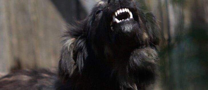 Šuns dantų priežiūra – ką privalu žinoti?