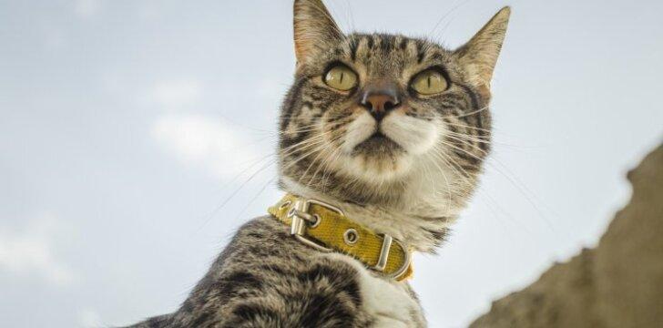 """Kodėl <span style=""""color: #c00000;"""">negalima dėti</span> antkaklio katei"""