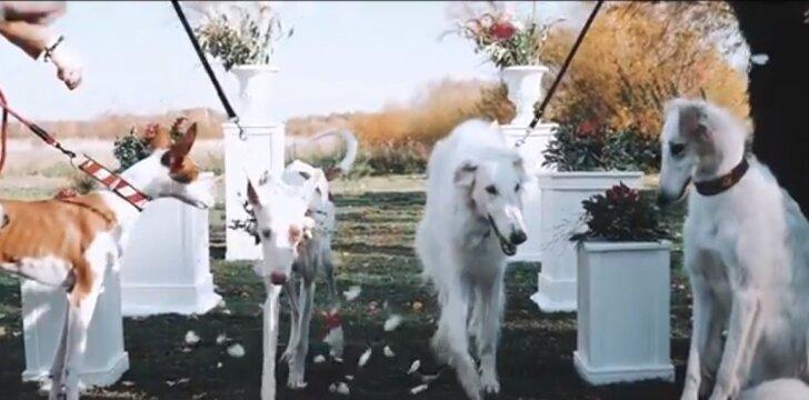 Šunų vestuvės Lietuvoje
