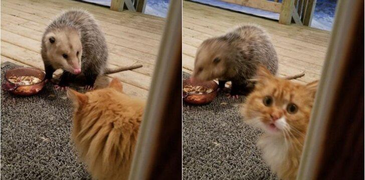 Katino reakcija į maisto vagį