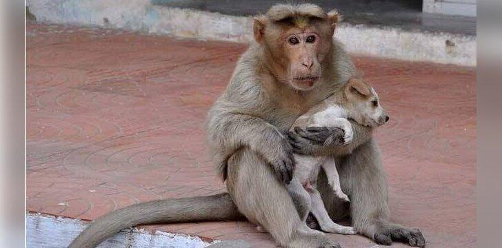 Beždžionė ir šuniukas