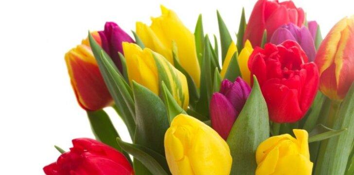 Receptas ilgesniam skintų gėlių šviežumui išsaugoti