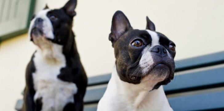 Auginantys šunis tikrai supras: gyvenimas iki ir po