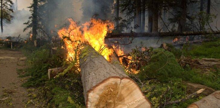Kontroliuojamas miško gaisras Švedijoje