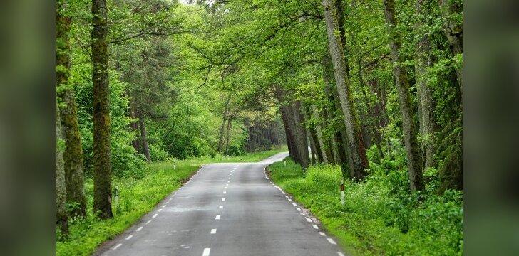 Įstatymų leidėjai užsimojo įteisinti statybas net miškuose