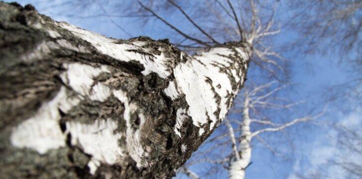 Klausia skaitytojas: ką daryti, jei kaimynui trukdo medis?
