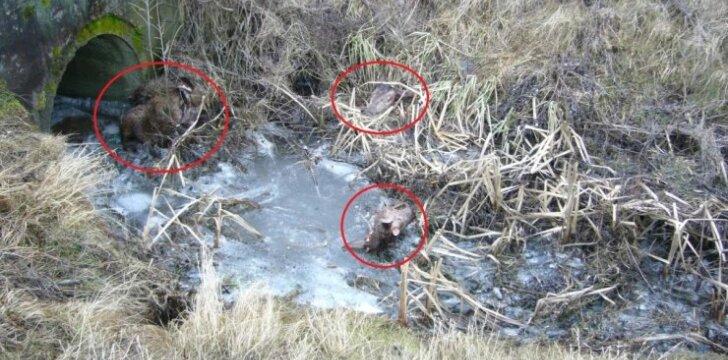 Vieta, kur rastos tauriųjų elnių liekanos