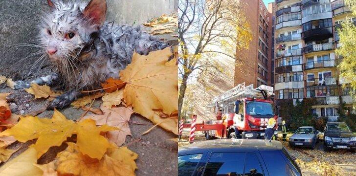 Ugniagesių išgelbėta katytė