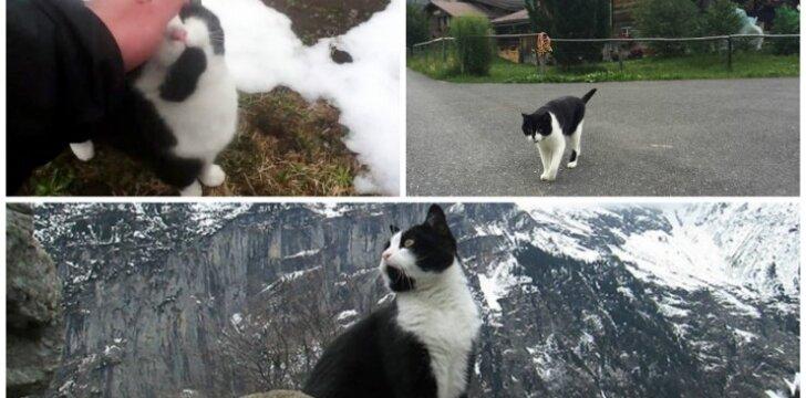 Katė kalnuose išgelbėja turistą