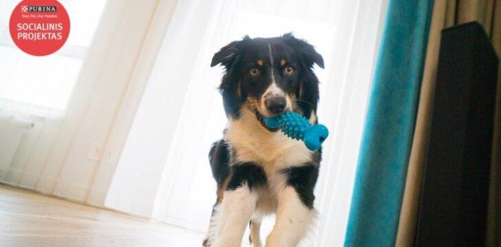 Pirmagimio besilaukiančios moters sprendimas – įsigyti šunį